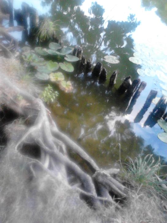 o bucatica de lac